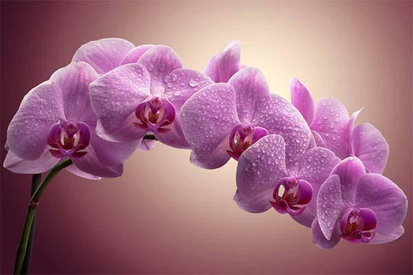 15 занимательных фактов об орхидеях
