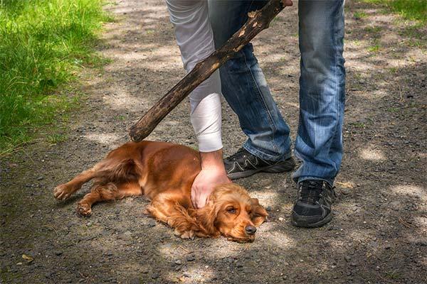 Чего нельзя делать при обучении собаки