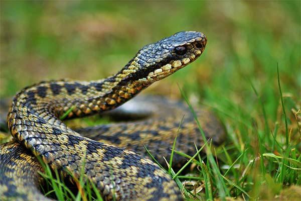 Действия при встрече со змеей