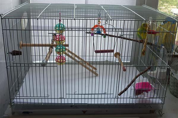 Где поставить клетку для попугая