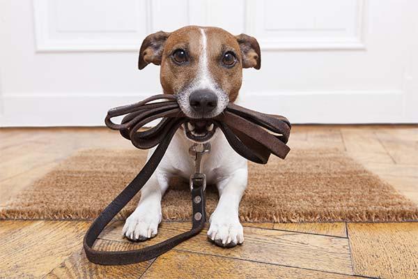 Как научить собаку проситься на улицу