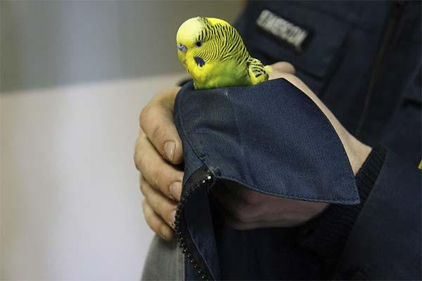 Как понять, что попугай замерз и как его согреть