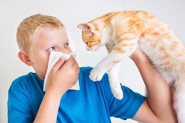 kak-projavljaetsja-allergija-na-koshek-u-detej