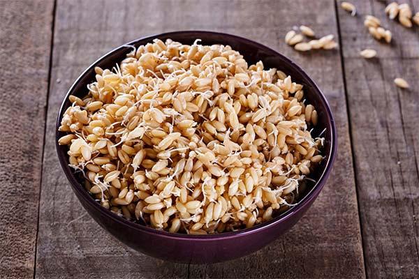 Как выбрать качественные пророщенные зерна