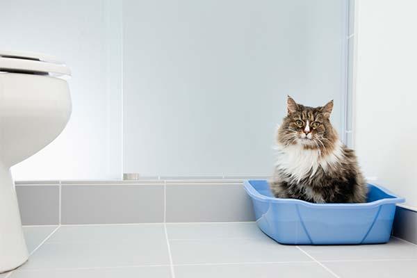 Кот не может сходить в туалет по-маленькому