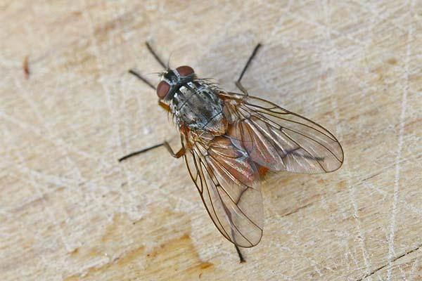 Меры профилактики появления мух