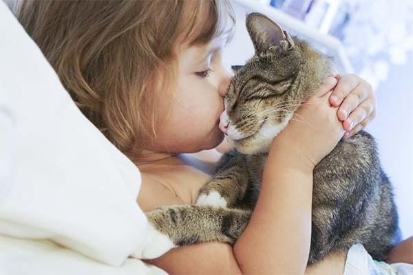 Можно ли продолжать жить с кошкой при аллергии