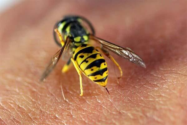 Можно ли умереть от укуса осы
