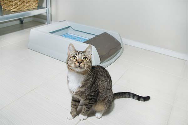 Почему кот или кошка не могут сходить в туалет по-маленькому