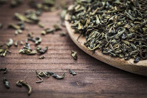 Польза листового чая