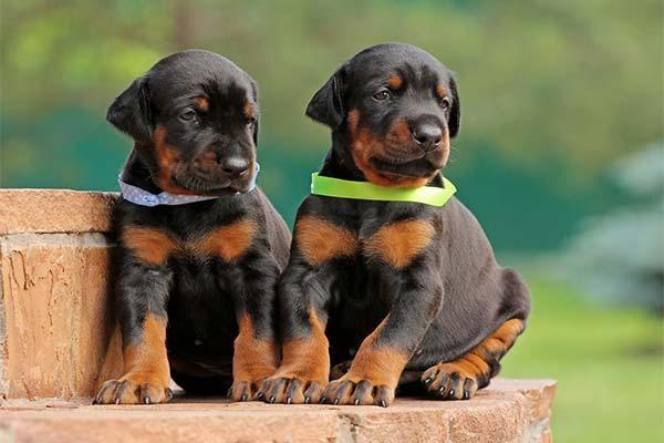Самые кусачие породы собак