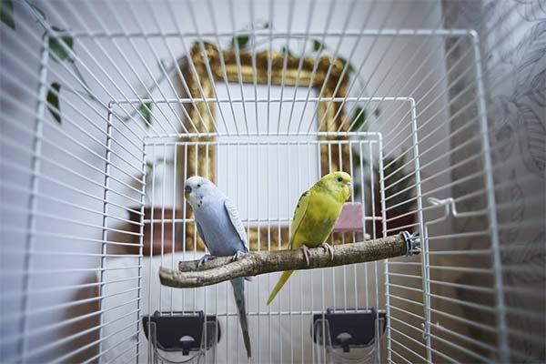 Что делать, если попугай замерз