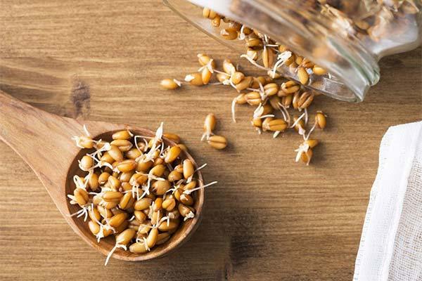 Сроки и условия хранения пророщенной пшеницы