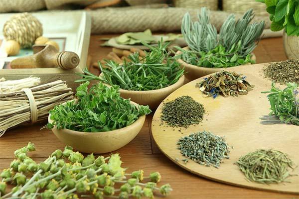 Травы для метаболизма