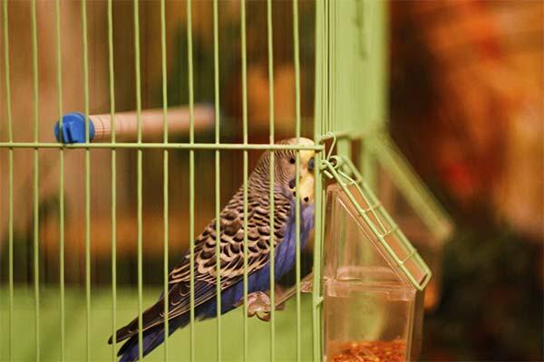 Выбор кормушки для попугаев